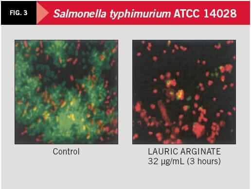Salmonella typhimurium ATCC 14028