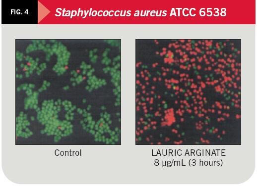 Staphylococcus aureus ATCC 6538